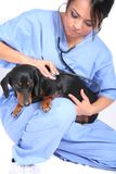 Female Healthcare Worker with Dog Royalty Free Stock Photography