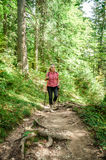 Female hiker in a forest royalty free stock photo