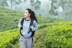 Female hiker standing in the tea plantation royalty free stock image