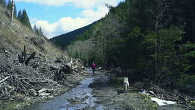 Female hiker and two husky dogs walking along the mountain stream. Slow motion stock video footage