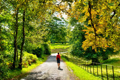 Female hiker walking through early Autumn woodland Royalty Free Stock Photo
