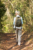 Female hiker walking forest. Back view of senior female hiker walking in forest Royalty Free Stock Photography
