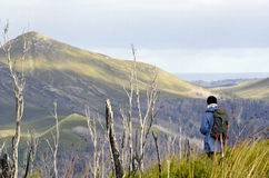 Female hiker in wilderness, Tasmania, Australia Royalty Free Stock Images