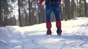 Female hiking with a backpack in beautiful winter forest. HD stock video footage