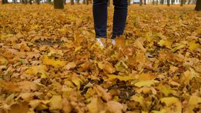 Female hipster kicking fallen autumn leaves walking in forest stock video footage