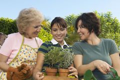 Female Holding Potted Plants With Mother And Grandmother. Young female holding potted plants with mother and grandmother looking at her Royalty Free Stock Photo