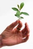 Female holding seedling Stock Photos