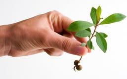 Female holding seedling Stock Photo