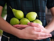 A female holding several pears stock photography