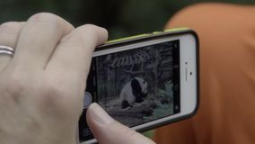 Female on holiday snaps cell phone picture of Panda. Female on holiday snaps cell phone technology picture of Panda stock footage