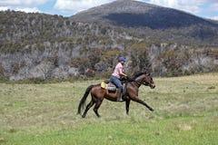 Female horse rider Royalty Free Stock Image