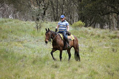 Female horse rider Royalty Free Stock Image
