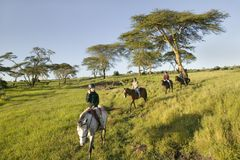 Female horseback riders ride horses in morning at the Lewa Wildlife Conservancy in North Kenya, Africa Stock Photos