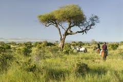 Female horseback riders ride horses in morning at the Lewa Wildlife Conservancy in North Kenya, Africa Royalty Free Stock Photo