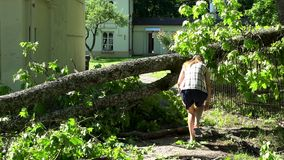 Female house owner walk over fallen tree after storm. 4K stock video