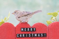 Female house sparrow perched on a fence decorated with merry christmas sign Royalty Free Stock Photography