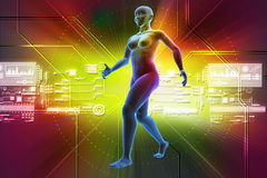 Female human body Stock Images