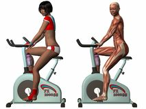 Female Human Body - Exercise Bike Royalty Free Stock Image
