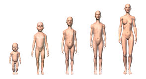 Female human body scheme of different ages stages. Female human body scheme of different ages stages, showing five different ages with relative body shapes. On Stock Images