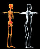 Female human body and x-ray skeleton Royalty Free Stock Image