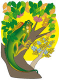 Female iguana. Drawing a female iguana in a tree Royalty Free Stock Photos