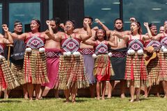 Female kapa haka dancers, New Zealand. Women and girls of a kapa haka, or traditional Maori dance group, performing. They wear pari, colorful bodices, and piupiu royalty free stock photography