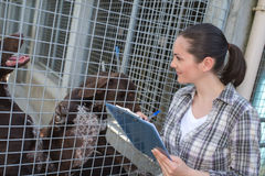 Female kennel employee checking dogs state. Female kennel employee is checking dogs state Stock Photography