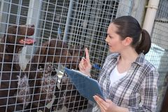 Female kennel employee checking dogs state. Female kennel employee is checking dogs state royalty free stock photo