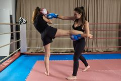 Kickboxing girls sparring. Female kickboxers sparring in the ring royalty free stock photos