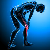 Female knee pain. 3d rendered medical x-ray illustration of transparent Female Skeleton with knee pain and blue background Stock Photo