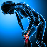 Female knee pain. 3d rendered medical x-ray illustration of transparent Female Skeleton with knee pain and blue background Stock Photos