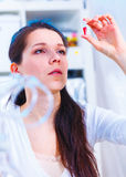 Female laboratory assistant royalty free stock photography