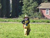 Female laborer walking through the fields of Carpinteria in Ventura County, California stock photos