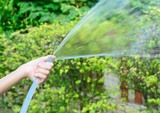 Female left hand is watering the plants in  garden Stock Image