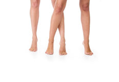 Female legs. Stock Photography