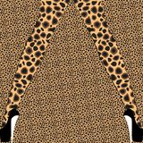 Female legs with animal print pattern tights on leopard background Royalty Free Stock Photography