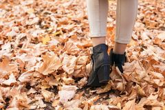 Female legs in autumn leaves stock images