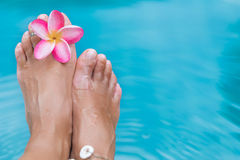 Female legs blue pool water frangipani flower Royalty Free Stock Images