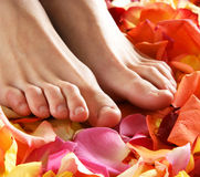 Female legs and bright petals Royalty Free Stock Photos