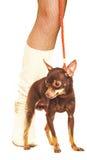 Female legs and dog. Stock Photo