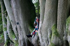 Lady`s legs in the cleft of beech trees royalty free stock images