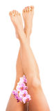 Female legs with orchid flower on white Stock Images