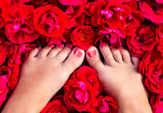 Female legs among of rose petals Royalty Free Stock Photos