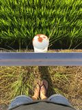Female legs wearing slippers while stainding in front of a railing and a rice field stock photos