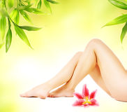 Female Legs With Pink Lily Royalty Free Stock Photo
