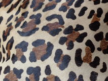 Female leopard skin pattern Stock Image