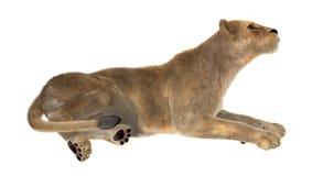 Female Lion Stock Images