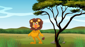A female lion Royalty Free Stock Photography
