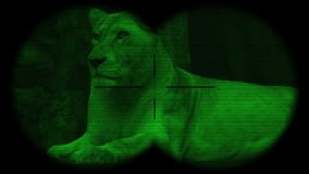 Female Lion Seen through Binoculars with Night Vision. Watching Animals at Wildlife Safari. Shot with a Sony a6300 fps 29,97 4k stock video footage