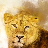 Female Lion in watercolor, Predator. royalty free illustration